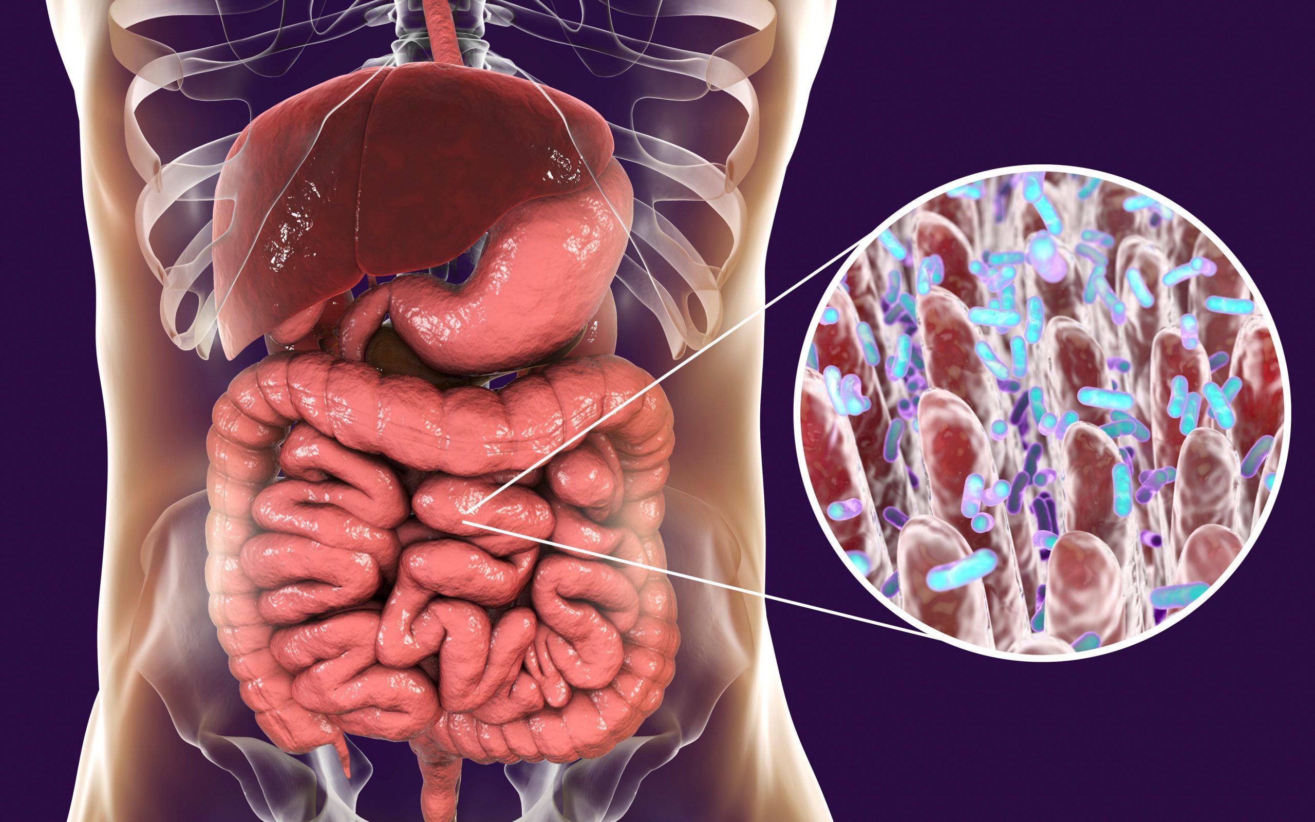 Darmflora nach Antibiotika