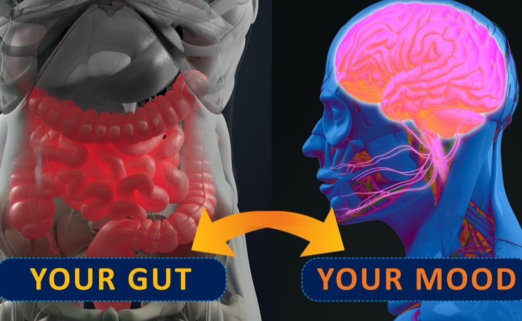Mikrobiom Darmmileu sanieren